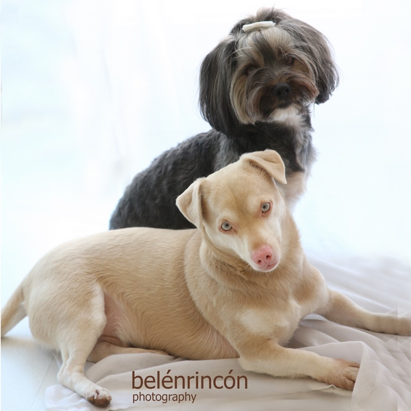 sesión de embarazo con mascota